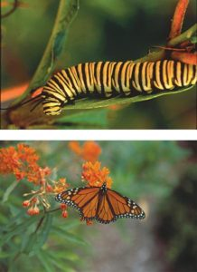 Cover photo for Butterfly Garden