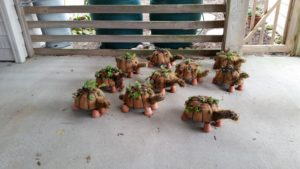 Cover photo for Succulent Turtle Topiary Workshop