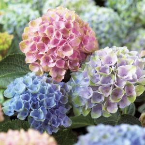 Cover photo for OBX Living Series | Master Gardener Volunteer Association Program (Open to the Public)