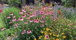 Cover photo for OBX Living Series|Native Perennials