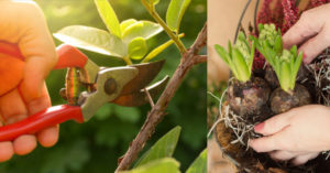 Cover photo for OBX Living Series | Pruning Demo & Bulb Planting