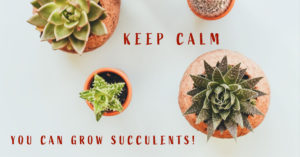 Cover photo for OBX Living Series Succulents