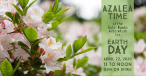Cover photo for Azalea Time in the Arboretum for Earth Day- POSTPONED
