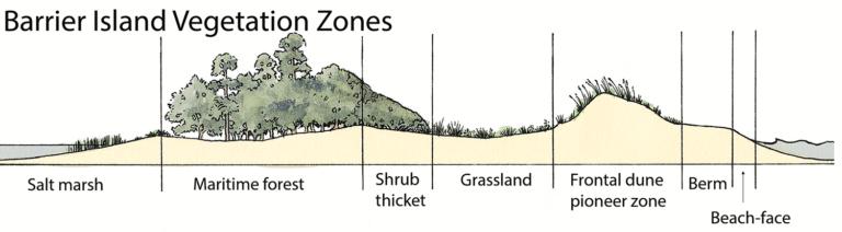 Barrier Island Vegetation Zones