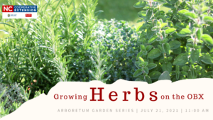 Cover photo for Arboretum Garden Series   Growing Herbs on the OBX