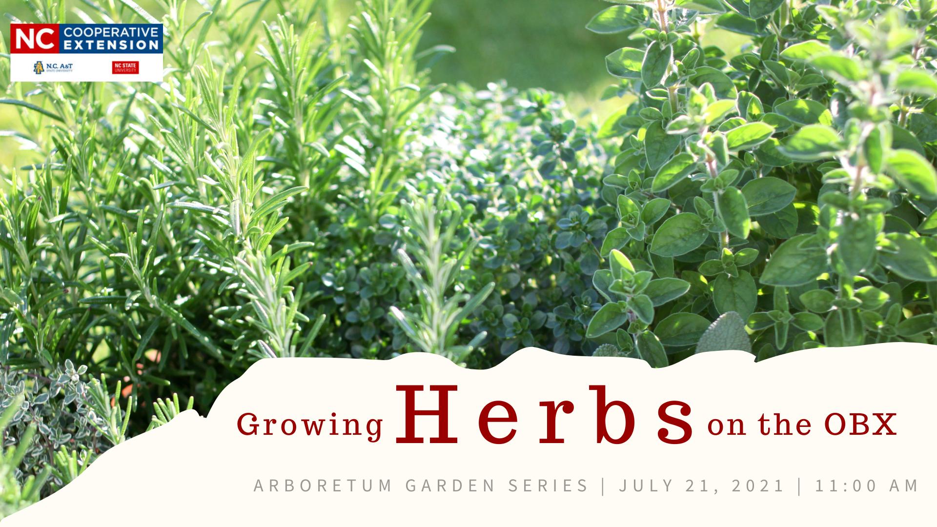 Herbs in a garden