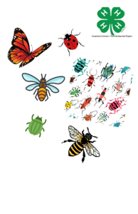 Cover photo for Bugs & Bees!